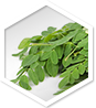 Moringa MD ingredient 1